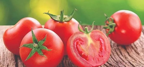 【币圈小故事】番茄的币圈起始之路