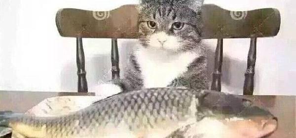 投资像吃鱼