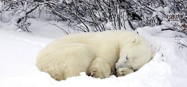【听风随笔】熊市正确的过冬姿势(从明天起休息10天左右)