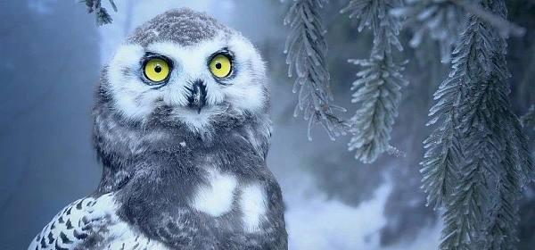 冬天来了,脑子该冷静下来了吧?